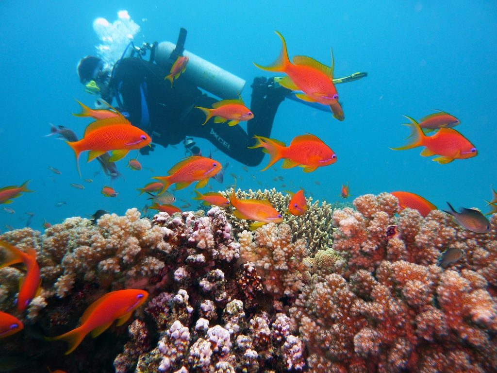 Clark Weeks scuba diving - cook islands